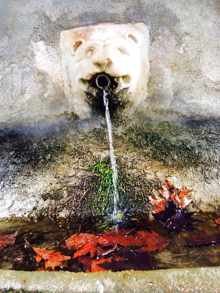 pelion-fountain-leaves